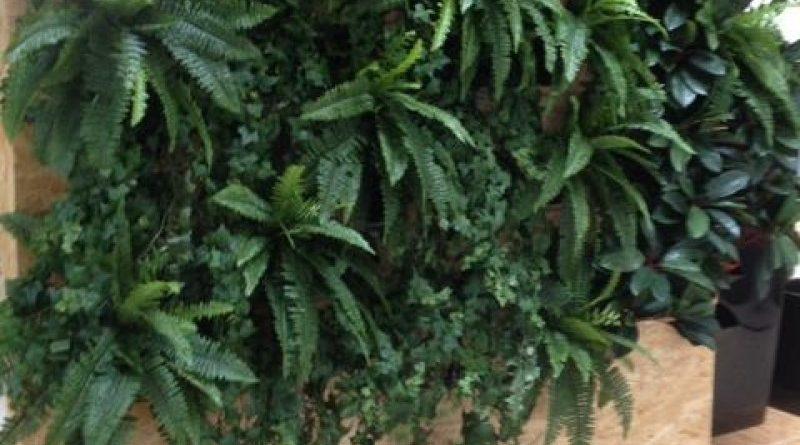 Pift receptionen op med en smuk og indbydende plantevæg