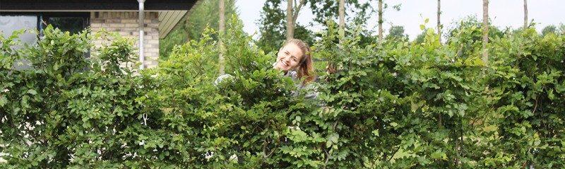 Færdige hækplanter - køb dem online